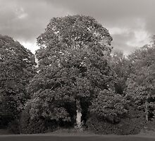 Autumn Trees, Bute Park, Cardiff by Artberry