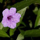 Little Purple Flower by Sam Matzen