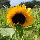 Sunflower Light by Warren  Thompson
