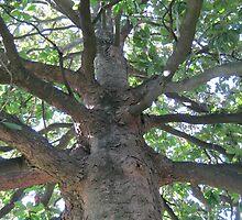 Bald Cypress 2 by dge357