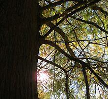 Bald Cypress 9 by dge357