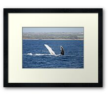 Humpback Whale Belly Up Framed Print