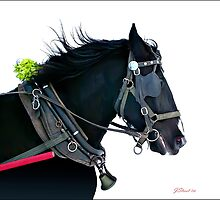Working horse by JaniceStreet