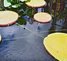 Giant Lily Pad by Polly Greathouse