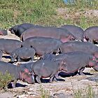 The Hippo Clan by Graeme  Hyde