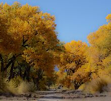 Cottonwoods by Denice Breaux