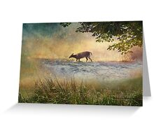 White Tail Deer Touting the Water - Parc National Mont Tremblant Greeting Card
