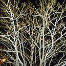Ice tree by venitakidwai1