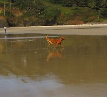 Young Red.....reflecting,...Florence, Oregon by trueblvr