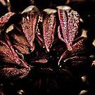 Dark Beauty by Terrie Taylor