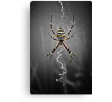 Golden Banded Garden Spider Canvas Print