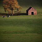 A Derbyshire Barn by geoff curtis