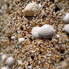 Seashells on a sea shore by Johnathan Bellamy