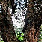 The Yew Tree by JEZ22