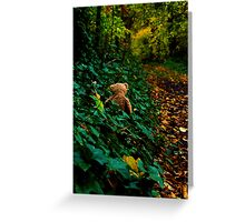 Bear looking for wintering spot Greeting Card