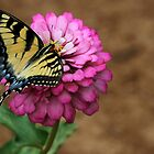 Sultry Swallowtail Butterfly by Sabrina Ryan