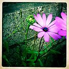 Purple Daisy by Marita