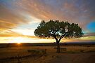 Tree at Sunset - NON HDR version by njordphoto