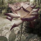 """""""A rose by any other name...""""  by KeeperOfKeys"""