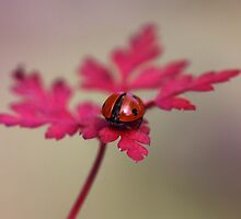 Ladybird in autumn by Ellen van Deelen