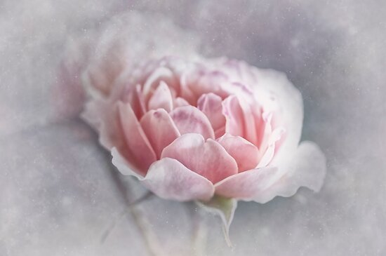 Softly Softly by Dianne English