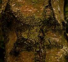 Interesting Tree Bark by Wealie