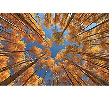 Glowing Forest Photographic Print