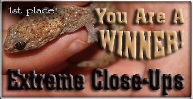 Extreme close up's winner banner. (Challenge still running) by Qnita