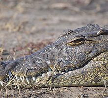 Crocodile at Chobe River by AndyKanzi