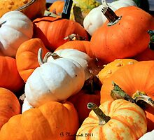 Pumpkin Harvest by Betty Northcutt