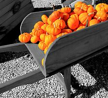 Orange Pumpkin Harvest by Betty Northcutt