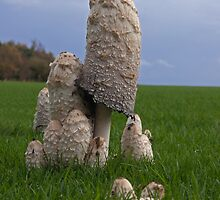 Mushrooms by LorrieBee