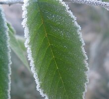 Frosted Elm Leaf by ingridthecrafty