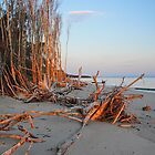 The Fallen Trees of Red Beach by Barbara Burkhardt
