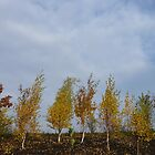 Autumn Yellow Trees, Blue Sky by HeklaHekla
