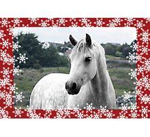 Connemara Pony Christmas Card - Type 1 Photographic Print