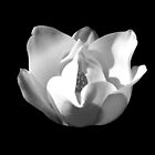 BLACK AND WHITE MAGNOLIA by joancaronil
