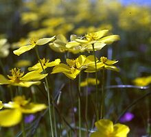 Yellow and Bokeh by Chris Gudger