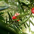 Green and red by Ana Belaj