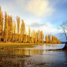 Lone Tree, Wanaka, New Zealand by damienlee