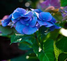 Flower by fisherfreek