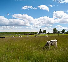 Cows by fisherfreek
