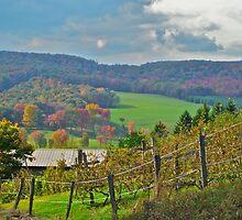 Mountain Vineyard by RICHARD CLINE