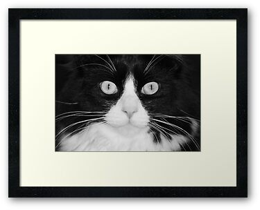 Jasper the Tuxedo Cat by eangelina64