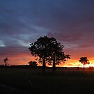 Sunset on King River - East Kimberley  by Natika