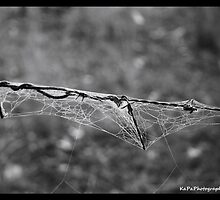 Web Browsing by KaPaphotography
