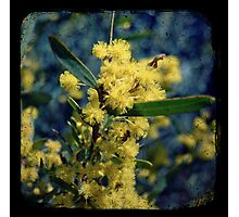 Tan Wattle Photographic Print