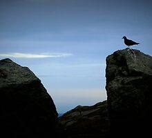 bird on a rock by Daphne Kotsiani