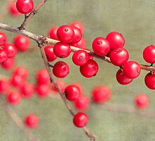 Dogwood Berries by Beth Mason