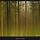 Autumn Woodland by AdornmentPhotog